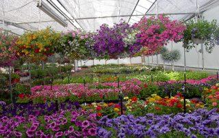 Nursery & Garden Center 14