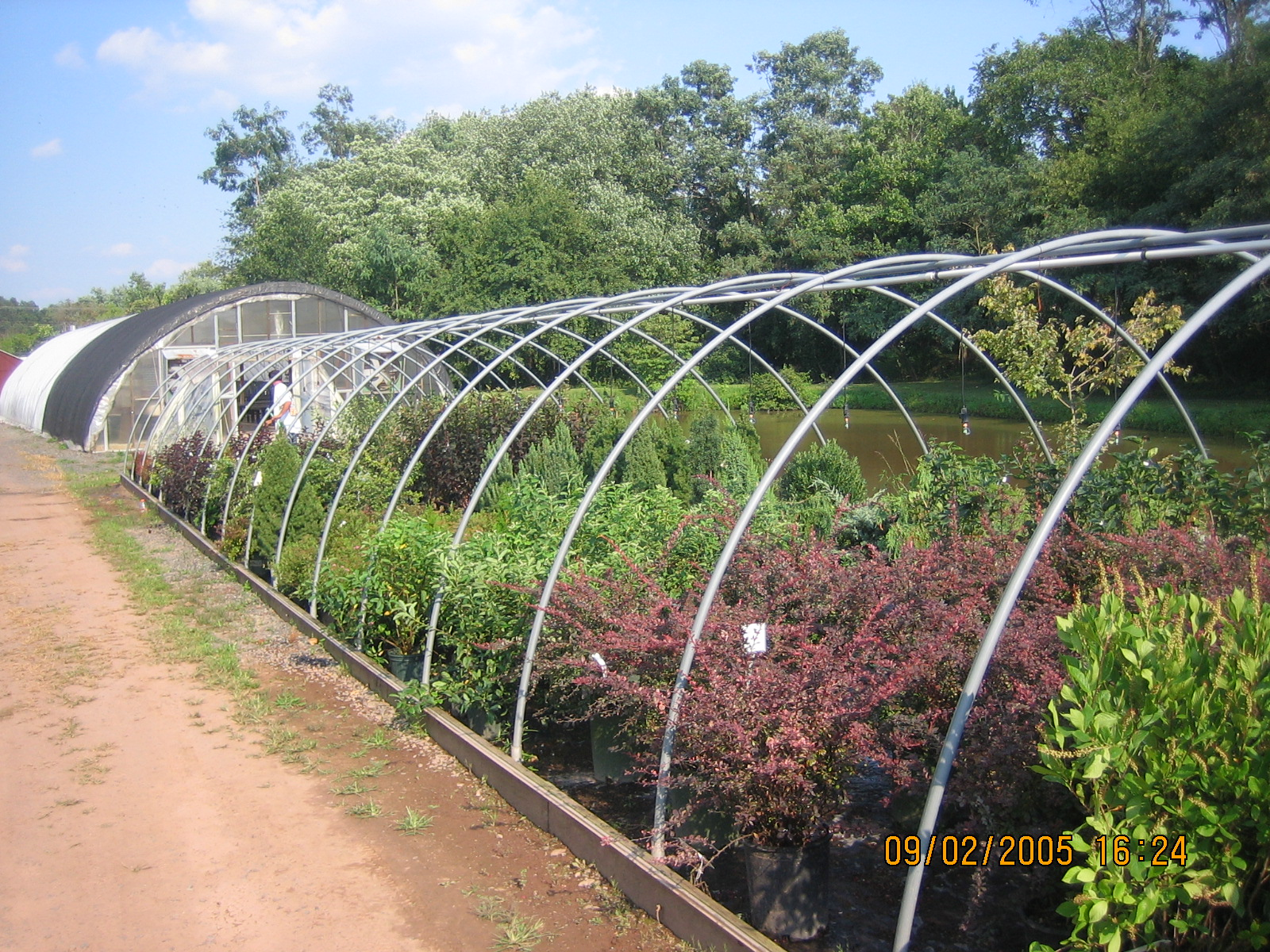 Local Nursery vs Big-Box Chains: What You Need To Know 1