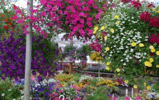 Nursery & Garden Center 11