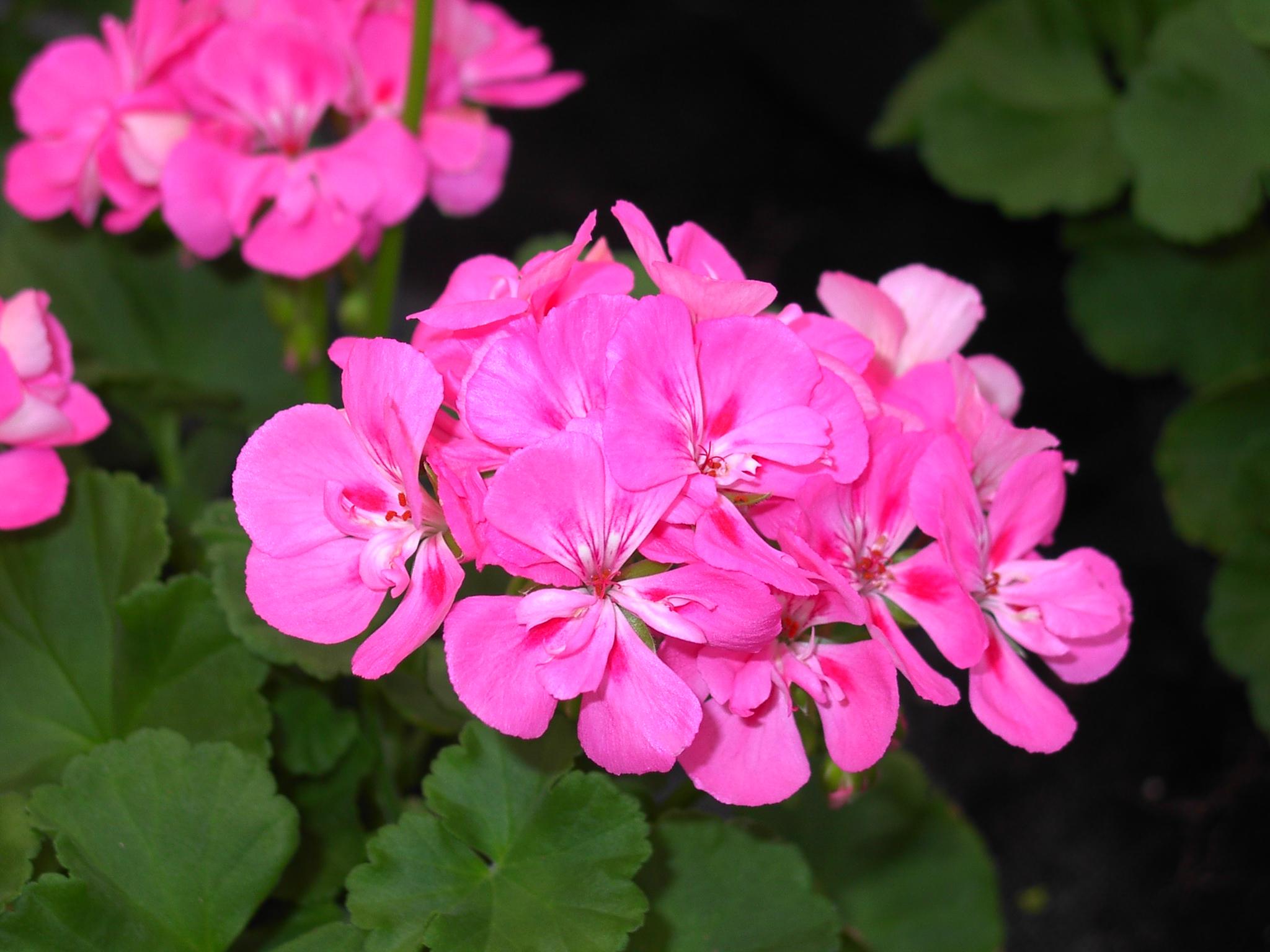Nursery U0026 Garden Center
