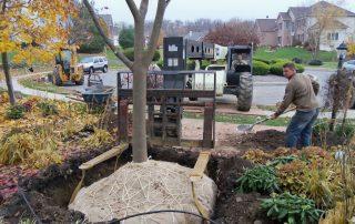 Proper Way to Plant a Tree 1