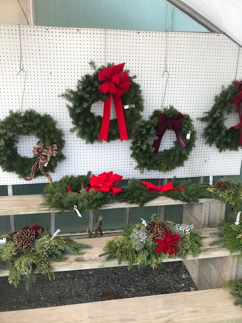 The Best Evergreens for Live Holiday Wreaths 4