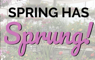 Spring Has Sprung! 7