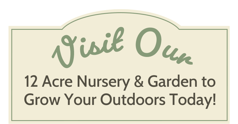 Visit our 12 acre nursery and garden