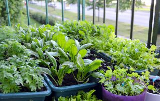 The Health Benefits of Gardening 1