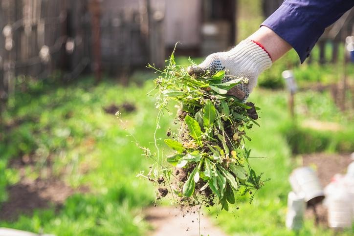 person weeding garden