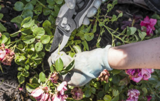 Person trimming flowers