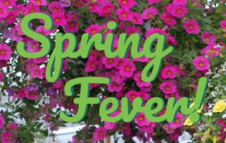 Spring Fever! 🌼 5