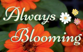 Always In Bloom 🌺 🌼 🌷 4
