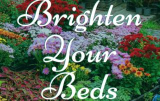 Brighten Your Beds! 🌺 3