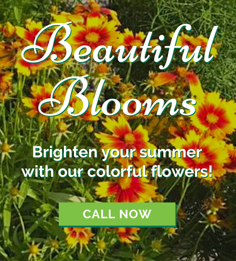 Summer's Brighter With Beautiful Blooms! 🌼 1