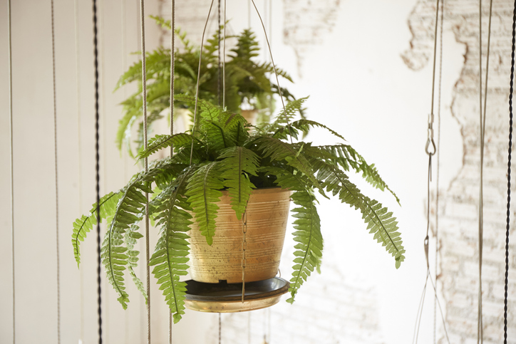 How To Care For Hanging Plants 3