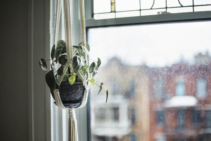 How To Care For Hanging Plants 2