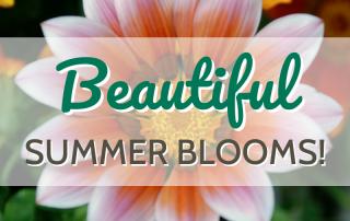 Beautiful Summer Blooms! 3