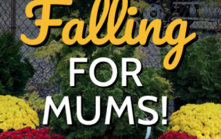 Falling For Mums! 🍂 2