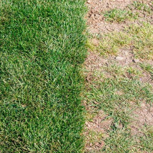 unseeded lawn